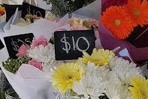 Lyttelton Farmers Market, Lyttelton, New Zealand