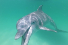 Panama City Dolphin Seafari