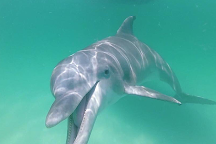 Panama City Dolphin Seafari, Panama City, United States