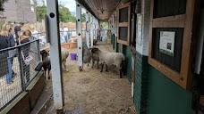 Vauxhall City Farm london