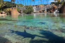 Predator Lagoon, Paradise Island, Bahamas