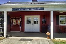 White Oak Lavender Farm & The Purple WOLF Vineyard, Harrisonburg, United States