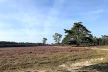Wezepse Heide, Wezep, The Netherlands
