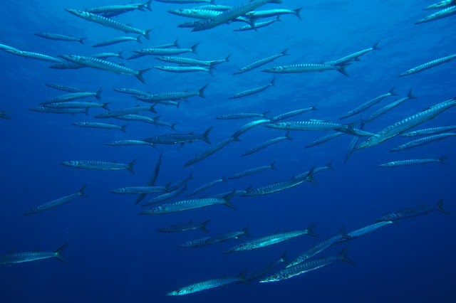 Sardinia Divers