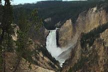 Cody Shuttle Service and Yellowstone Tours, Wapiti, United States