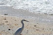 Tarpon Bay Beach, Sanibel Island, United States