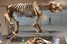 Queensland Museum & Sciencentre, Brisbane, Australia