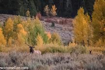 Wild Wyoming Tours, Jackson, United States