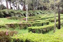 Parque Florestal das Sete Fontes, Sao Jorge, Portugal