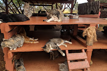 Lanai Cat Sanctuary, Lanai City, United States