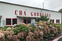 Plantacoes de Cha Gorreana, Sao Miguel, Portugal