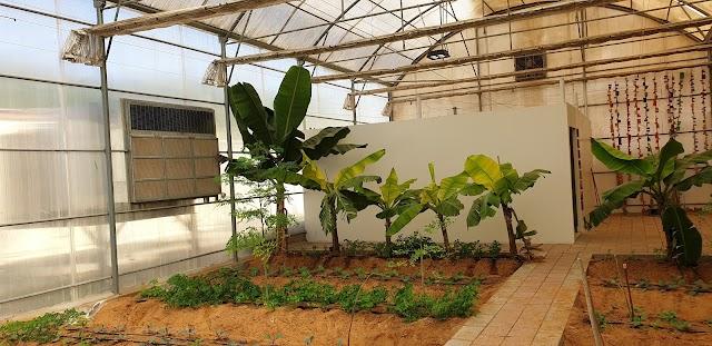 Emirates Bio Farm مزرعة الامارات البيولوجية