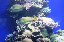 Underwater Observatory Marine Park, Eilat, Israel