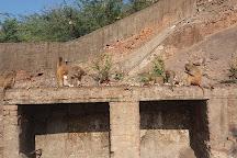 Monkey Temple (Galta Ji), Jaipur, India