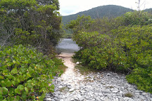 Laguna de la Bocaina, Puerto Cabello, Venezuela