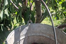 Apple Barrel Orchards, Penn Yan, United States