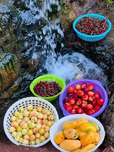 Haji Afghan Garden باغ حاجی افغان