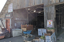 Swanton Berry Farm, Davenport, United States