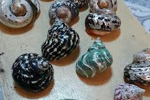 Nova Shells Museum, Panglao Island, Philippines