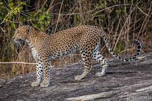 Yala Wild Safaris, Tissamaharama, Sri Lanka