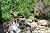 Piduruthalagala Forest Reserve, Nuwara Eliya, Sri Lanka