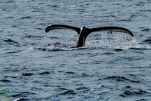 Captain Dan McSweeney's Whale Watching Adventures, Holualoa, United States