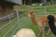 Velvet Hall Alpacas, Innerleithen, United Kingdom