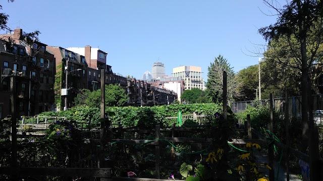Berkeley Community Garden
