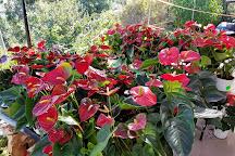 San Diego Botanic Garden, Encinitas, United States