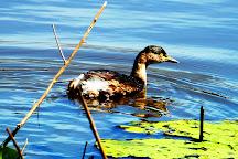 Hasties Swamp National Park, Atherton, Australia