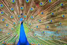 Thrissur Zoo & Museum, Thrissur, India