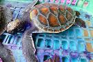 Sea Turtle Conservation Centre