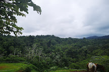 Ranch de Moreau, Goyave, Guadeloupe