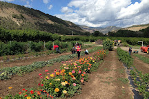 Orchard Valley Farms & Market, Paonia, United States
