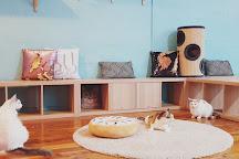 Catmosphere Cat Cafe Sydney, Sydney, Australia