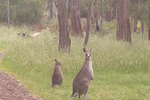 Mount Eccles National Park, Macarthur, Australia