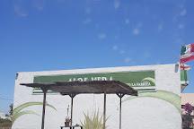 Aloe Vera museum, La Oliva, Spain
