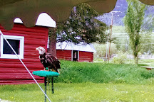 Teton Raptor Center, Wilson, United States