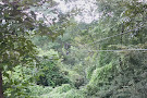 Spider Monkey Canopy Tours