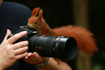 British Wildlife Centre, Lingfield, United Kingdom