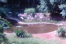 Umgeni River Bird Park, Durban, South Africa