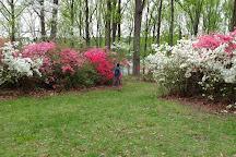Brighton Azalea Garden, Brookeville, United States