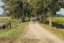 Kaziranga National Park, Golaghat, India