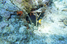 Molasses Reef, Key Largo, United States