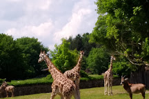 Safari Park Dvur Kralove, Dvur Kralove nad Labem, Czech Republic