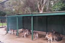 Armadale Reptile Centre, Armadale, Australia