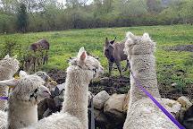 Curraghduff Farm, Oughterard, Ireland
