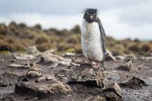 Cape Bougainville, East Falkland, Falkland Islands