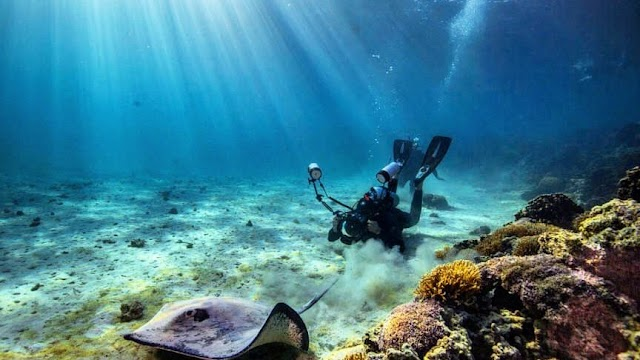 Prodive Lord Howe Island