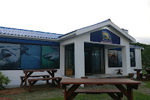 Shark Diving Unlimited, Gansbaai, South Africa